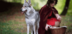 Little-Red-Riding-Hood-Syndrome-